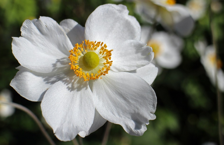 Flori de toamna: cele mai frumoase 15 flori 2