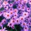 Flori de toamna: cele mai frumoase 15 flori