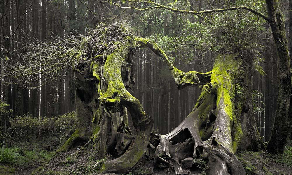 Afla totul despre Padurea Baciu chiar acum! Lucruri inspaimantatoare se intampla la fiecare pas!, Charmy