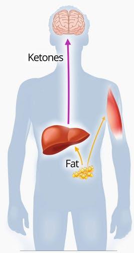 Dieta ketogenica, Charmy