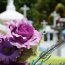 Cât costă o înmormântare? De ce să colaborezi cu o echipă de servicii funerare? Cum te ajută un pachet funerar standard să reduci costurile de înmormântare?