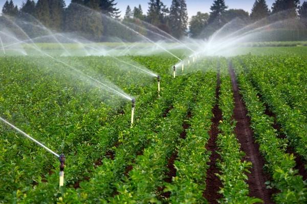 Principalele beneficii ale sistemelor de irigaţii pentru grădini, Charmy