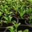 Ce este o grădină organică: informații despre cultivarea unor grădini organice