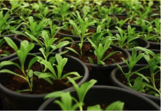 Ce este o grădină organică: informații despre cultivarea unor grădini organice, Charmy